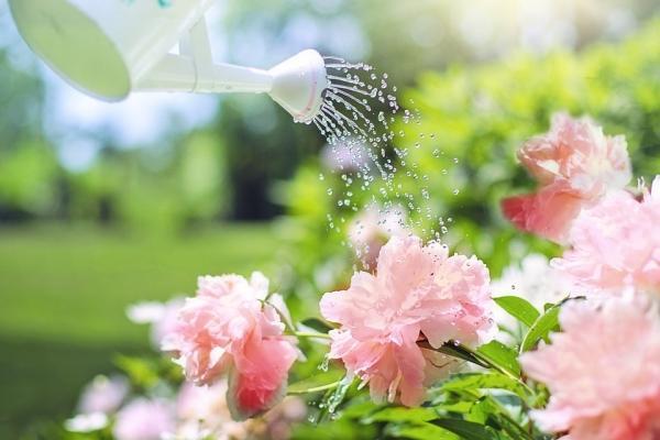 Irrigazione delle piante con corroboranti naturali