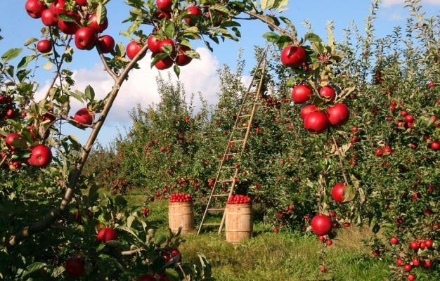Prodotti da agricoltura biologica