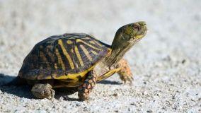 Animali e piante esotiche, tenerli in casa a norma di legge