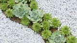 Giardino secco