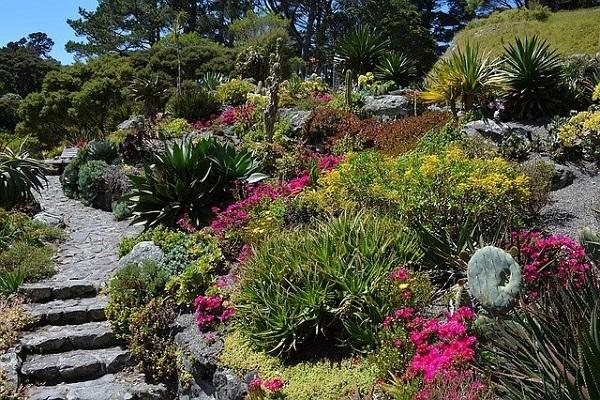 Giardino secco con scala da mrplantgeek.com