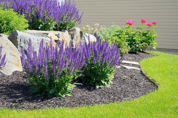 Giardino secco fiorito