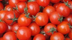 Le varietà di pomodori da coltivare in orto casalingo