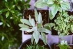 Piante che è possibile coltivare in estate: erbe aromatiche