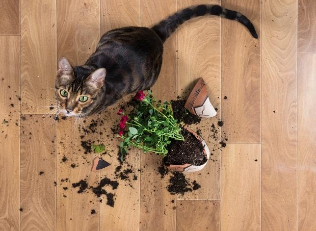Gatto e vaso rotto