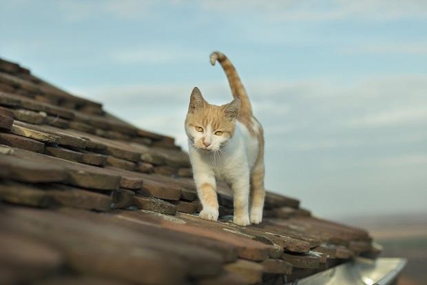 Gatto su tetto in condominio