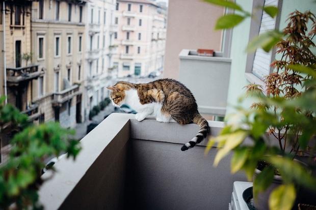 Gatto su balcone in condominio