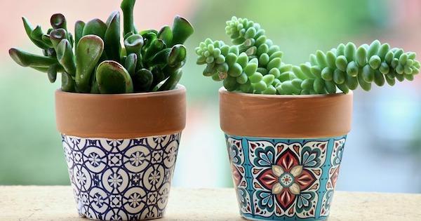 Coltivazione in vaso delle piante succulente