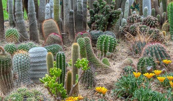 Coltivazione outdoor delle succulente