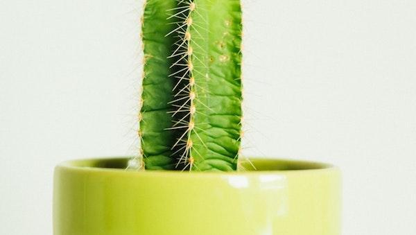 Presenza di macchie sul fusto delle succulente
