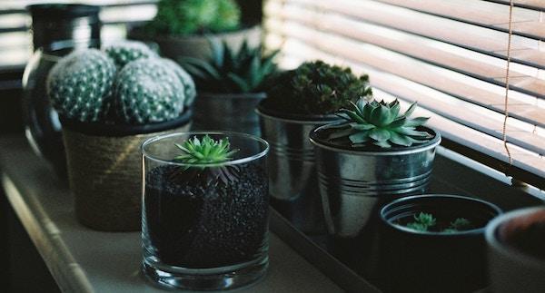 Composizione del terreno per le succulente