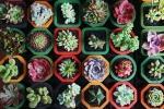 Varietà di succulente pronte per il trapianto