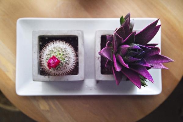 Decorazioni e centrotavola con le succulente