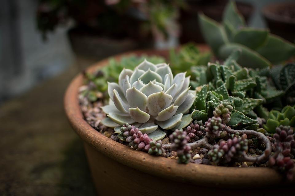 Mix di succulente in vaso