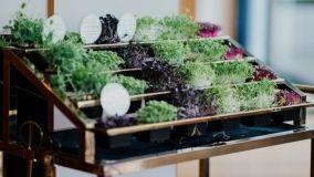 Come realizzare un orto verticale: idee e consigli