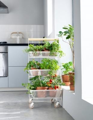 Orto verticale dentro casa con il carrello RISATORP di IKEA - Foto di Monika Lundholm