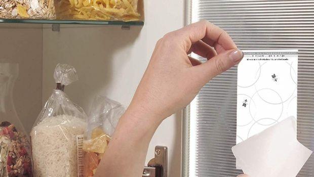 Come eliminare le farfalline del cibo dalla dispensa