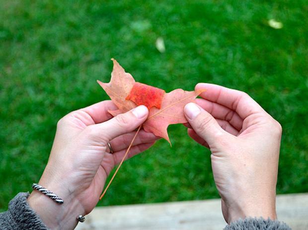Riciclo foglie secche: bouquet, parte 1, da designsponge.com