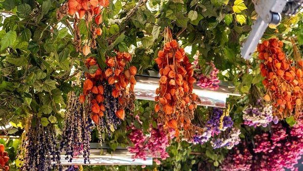 Il ritorno dei fiori secchi: ecco come essiccarli