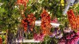 Essiccare fiori ed erbe