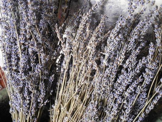 Essiccare fiori freschi come la lavanda