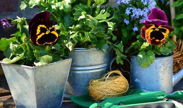Coltivazione dei fiori autunnali: messa a dimora
