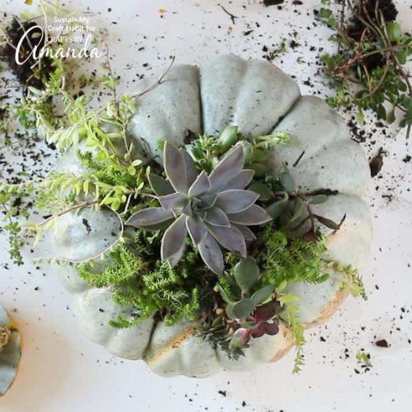 Zucca scavata che diventa vaso per succulente di Craftsbyamanda.com