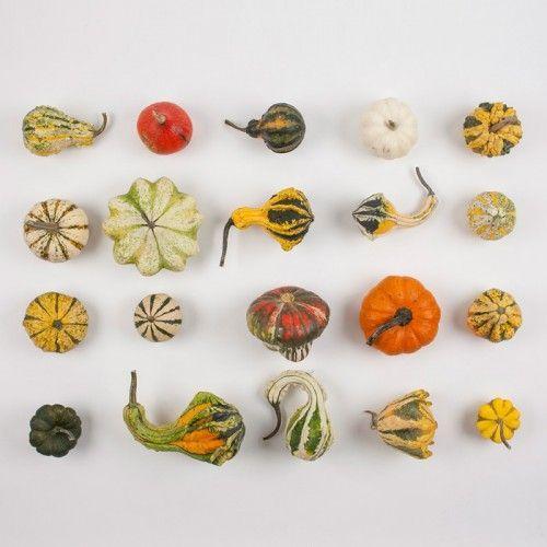 Zucche ornamentali da Zuccheornamentali.com