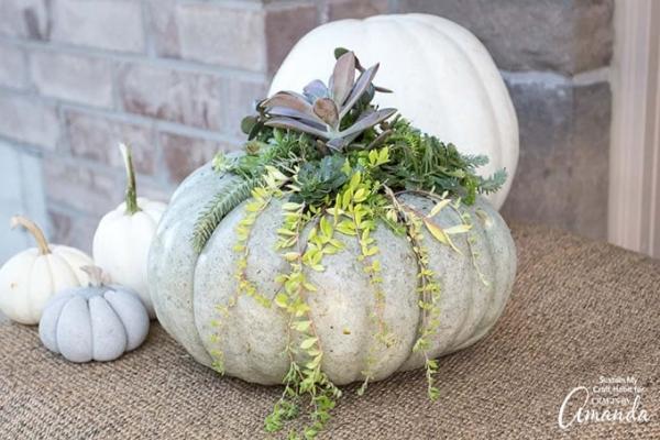 Zucca vaso per piante grasse di Craftsbyamanda.com