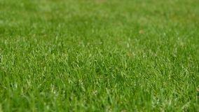 Manutenzione dei prati in giardino:cosa sapere sulla semina e sulla concimazione