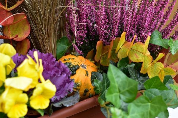 Piante ornamentali per decorare vasi da esterno