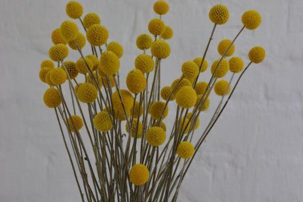 Rami secchi per composizioni floreali perenni su Colvin