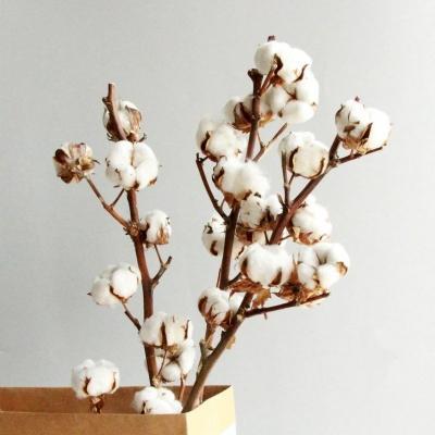 Rami secchi fiori di cotone su Etsy