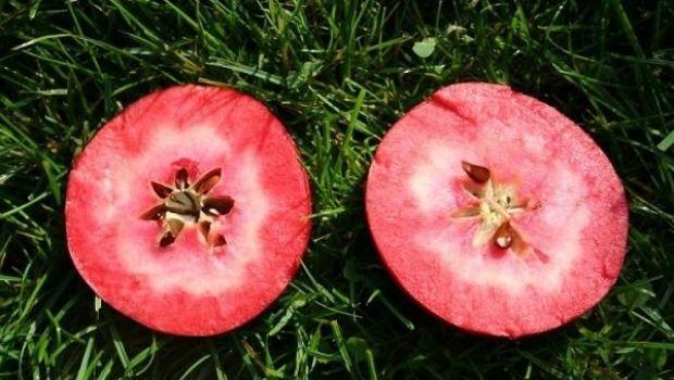 Red Love Apple: ricette e proprietà della mela dalla polpa rossa