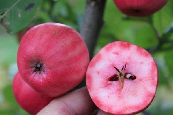 Red love apple interno da amazon.it