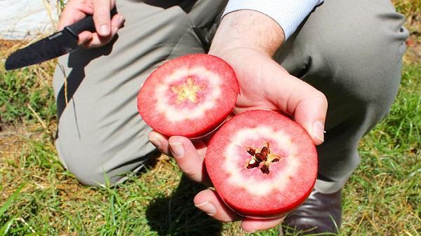 Coltivazione red love apple da sbs.com.au
