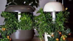 Piccole serre indoor per coltivare anche in inverno