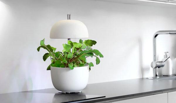 Plantui 3e, mini serra idroponica - Foto by Plantui