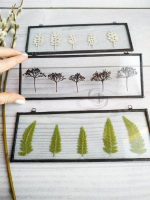Incorniciare le piante essiccate, da Etsy