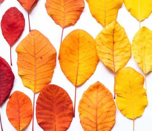 Colori caldi d'autunno
