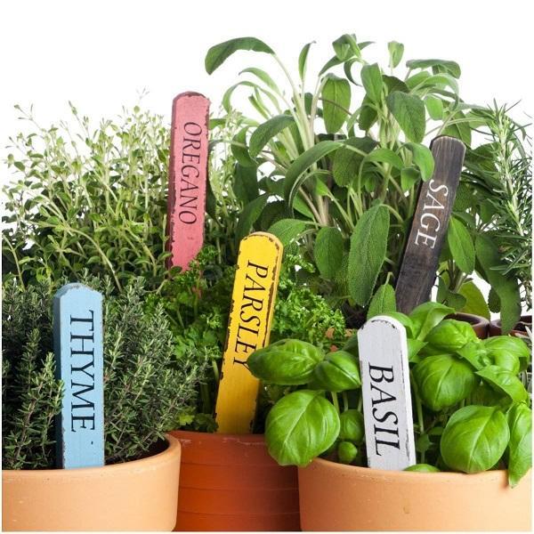 Personalizzare le piante aromatiche, da lazada.com.ph