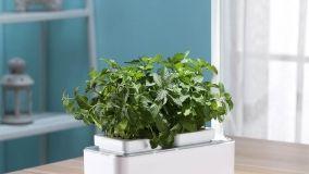 Coltivare prodotti sempre freschi: l'orto idroponico