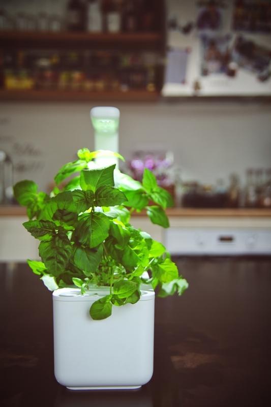Pianta di basilico, Smart Garden 3 di Click & Grow