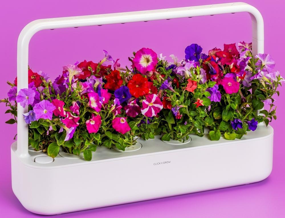 Coltivazione di peonie nell'orto Smart Garden 9 di Click & Grow