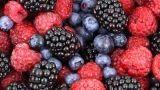 Coltivare i frutti di bosco