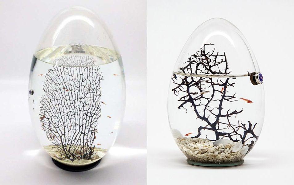 Complementi d'arredo con ecosistemi in miniatura Beachworld di The Art of Science