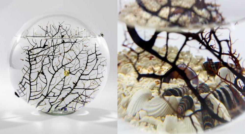 Complemento d'arredo con ecosistema in miniatura Beachworld by The Art of Science