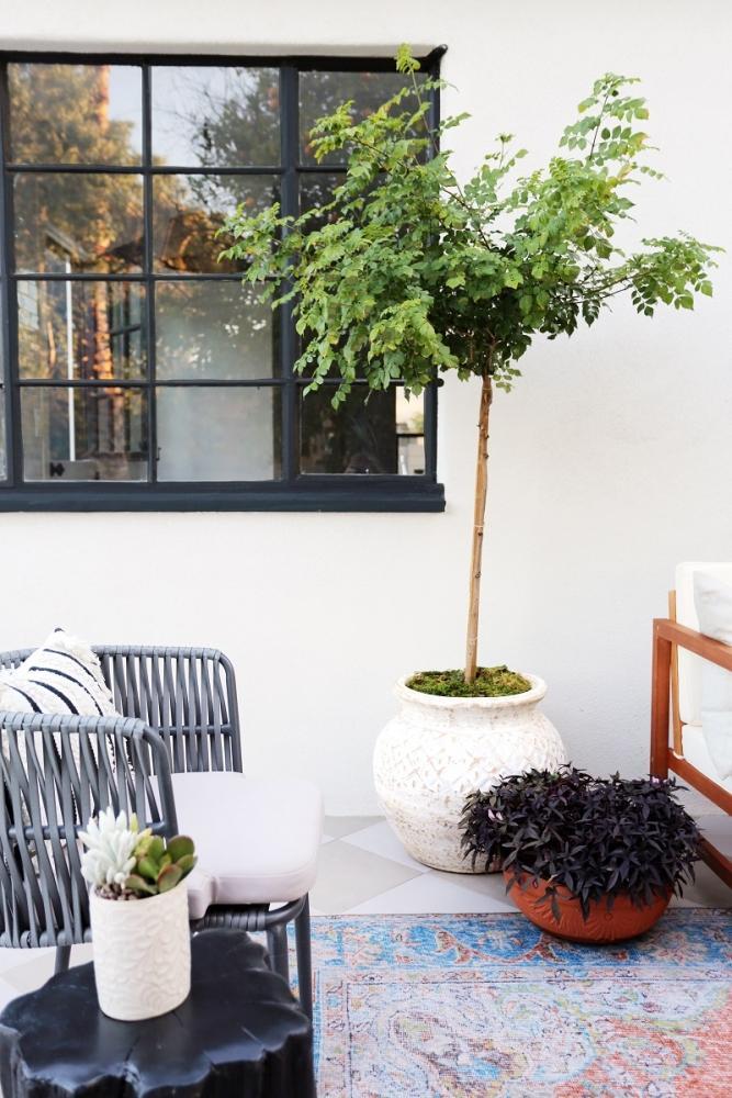 Basta anche un solo albero, da juniperhome.com