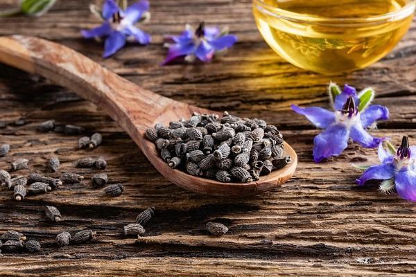 Olio di semi di Borragine