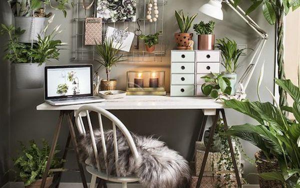 Piante a foglia verde per decorare - Fonte foto: Pinterest